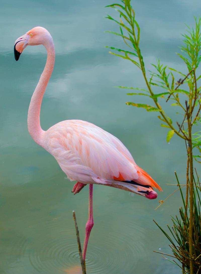 Pink-flamingo-1408814035wsK